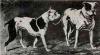 1819oldbulldogsvj7