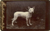 1890bgz5