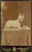 1897kz0