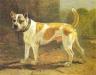 bullterrier1804