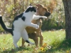 cat-fight-a-dog