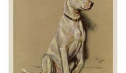 История появления собаки