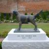 Удивительный пес по кличке Джим