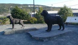 Ньюфаундленд Тан