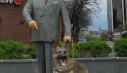 Первое всевидящее око собаки в Америке.