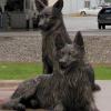 Антуан Робиду и его собаки