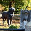 Железная собака на кладбище Голливуд
