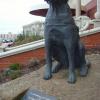 Собака-поводырь в Уолласи