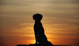 Шиваджи и его собака.