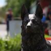 «Фронтовая собака»