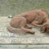 Брошенный пес Сосновоборска